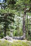 švédská příroda