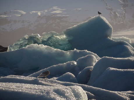 birds have great view from the icebergs