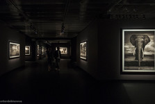 "amazing Nick Brandt exhibition at ""Fotografiska museet"" – the Museum of Photography"