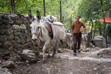zásobování často obstarávají muly