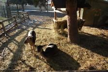 Podhájska – mini zoo