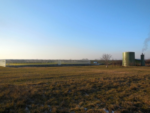 Podhájska – greenhouses