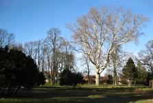 anglický park v Rusovciach