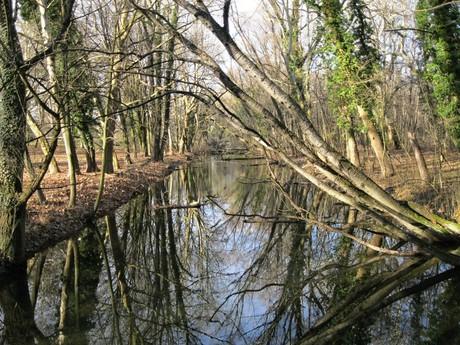 Dunajské luhy
