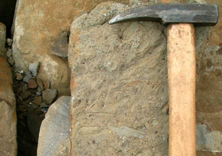 Hajnáčka - ilustračné foto paleontologického nálezu