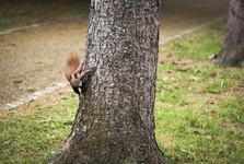 squirrels in Szczytnicki park