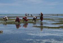 místní ženy při sběru chobotnic a řas