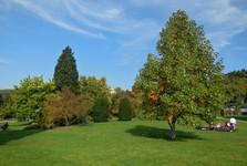 Botanical Garden of Prague