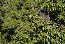 monkeys bring live to treetops in rainforest