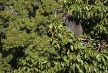 opičky oživují stromy deštného lesa