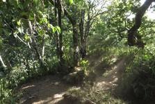 užíváme si zeleně na Lomboku