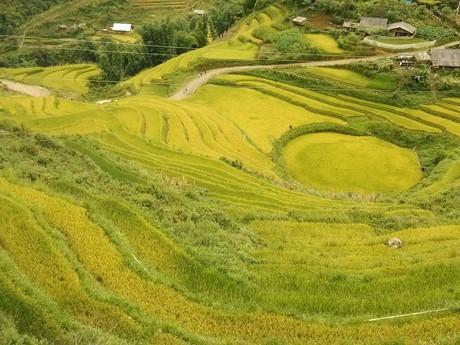 Sa Pa – terrace fields