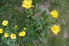 tatranská květena