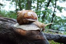 Slovenský raj - fauna