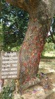 «Враждебное дерево»