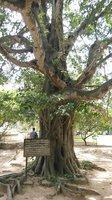 """""""Kouzelný strom"""""""
