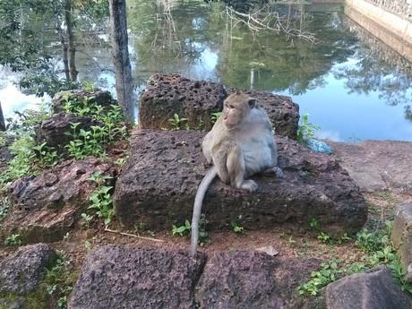 všudypřítomné opičky
