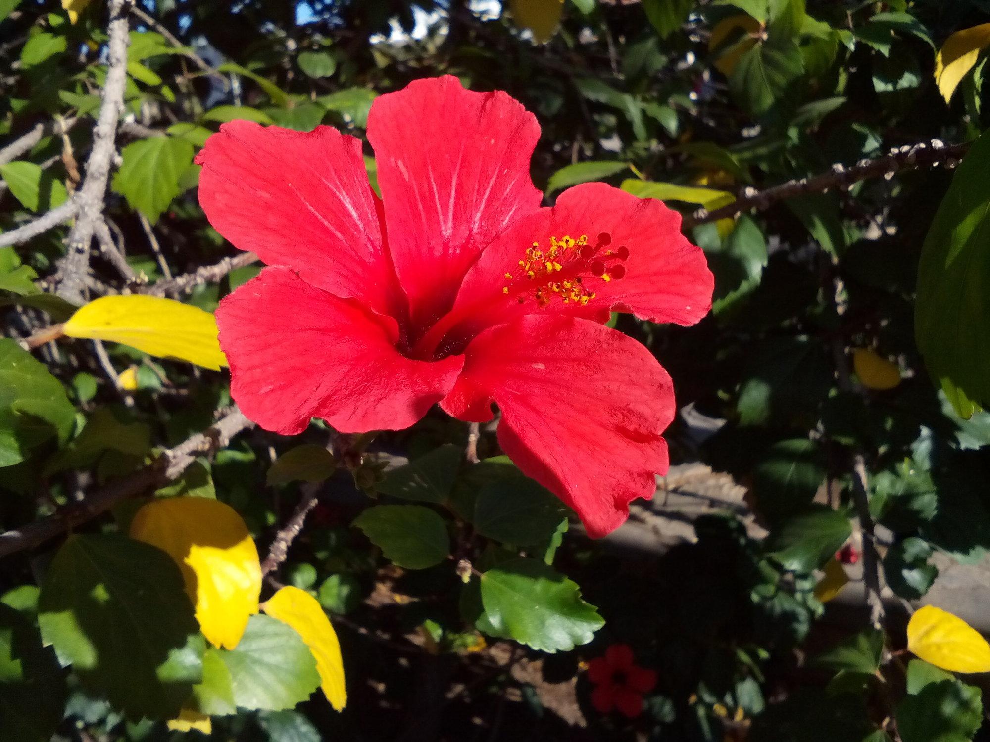 Spain malaga city which lives enfoglobe hibiscus flowers parque de mlaga hibiscus flowers parque de mlaga izmirmasajfo