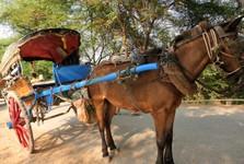 koňská rikša - typický dopravní prostředek na Inwě