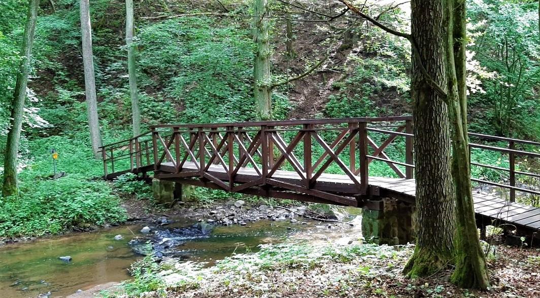 forest walkways around the Mnichovka creek