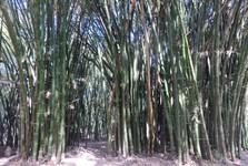 bambusová časť záhrady