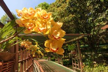 thanks to good climate orchids grow even outside