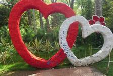 kvetina je znamením lásky