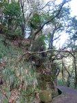 Madeira, road to Balcoes