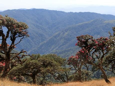 Mt. Victoria leží ve 3 200 m n. m.