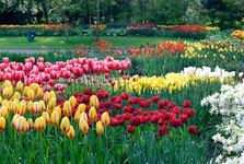 květinová zahrada Keukenhof