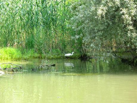 delta Dunaje