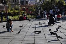 kŕmenie holubov na Plaza Murillo