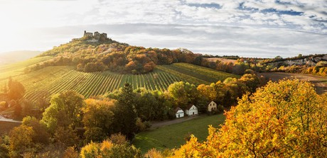 Wine Autumn – Lower Austria