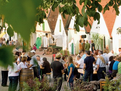 Vinařský podzim – Dolní Rakousko