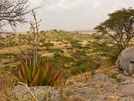 NP Serengeti – landscape