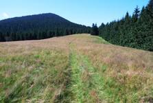 Oravská Magura, pláně