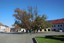 Верхняя площадь (ренессансные дома и липы)