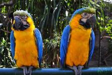 papoušci v santacruzské zoo