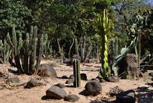 v botanické zahradě – kaktusová část