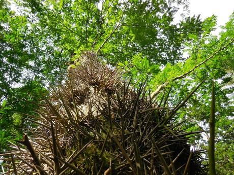 Курортный парк — редкие деревья