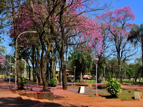 park se stromy lapacho