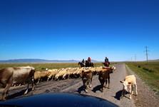 Kazakh shepherds