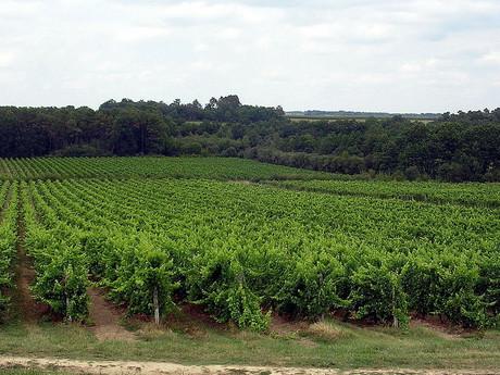 vinice v provincii