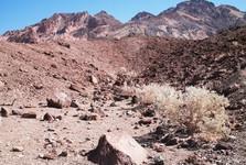 desert nature in Death Valley