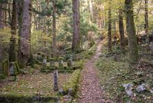 """hřbitov, který pomalu """"srůstá"""" s lesem"""