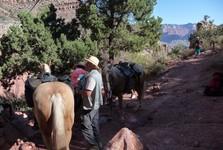 do kaňonu jde sejít i na mulách