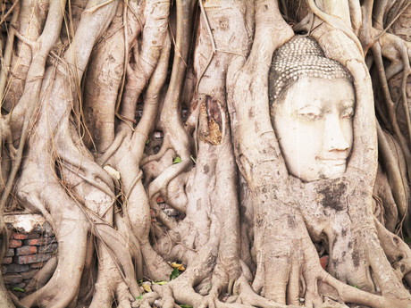Ayutthaya – the head of Buddha in the roots of tree
