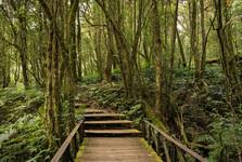 mlžný prales na vrcholu