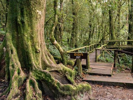 začátek stezky v mlžném pralese