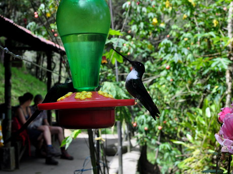 a hummingbird in Reserva Natural Acaime